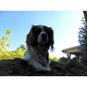 Baustelle /Hund auf Baustelle