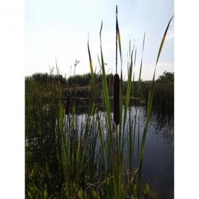 natürliche Wildblumenwiese /Die Natur - Zitat