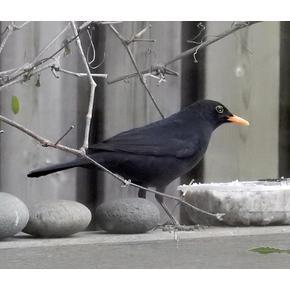 Gartenbewohner /Vogelfutter